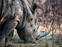Rhino in Matopos, Zimbabwe.